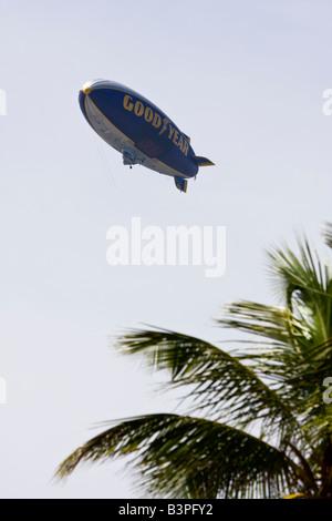 Goodyear airship above palm tree fronds, Florida, USA - Stock Photo