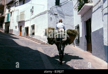 A man and dog ride a mule through a typical street in the small town of Alcaraz in Albacete Province south eastern - Stock Photo