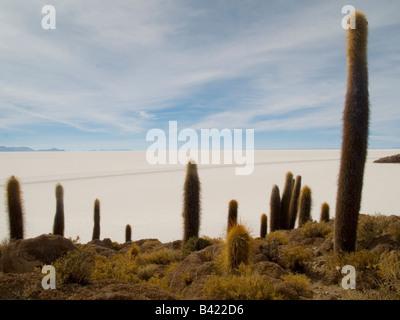 Cacti on Isla de los Pescadores and salt flats Salar de Uyuni Southwest Highlands Bolivia, South America - Stock Photo