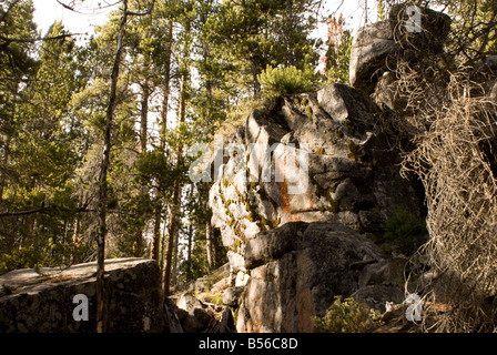 Forest boulders in shadow - Stock Photo