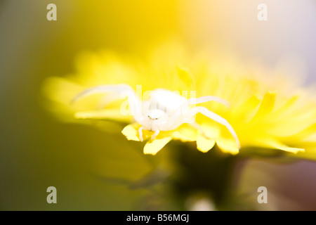 A spider on a flower - Stock Photo