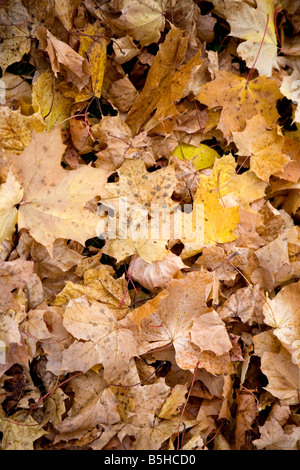 Herbstlaub am Boden, autumn leaves - Stock Photo
