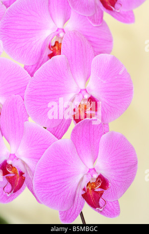 Panama orchids at an exhibition - Stock Photo
