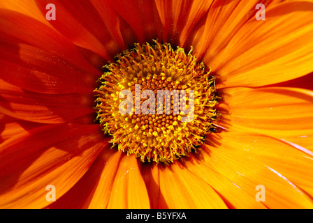 corolla of flower - Stock Photo