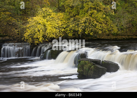 Aysgarth Falls Wensleydale Yorkshire Dales National Park - Stock Photo