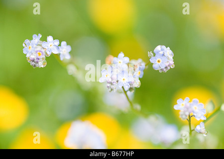 Close up of flowers - Stock Photo