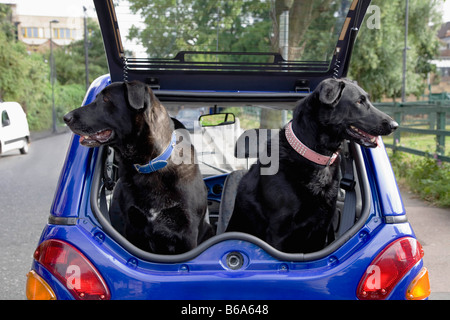 Dogs panting in boot of electric car - Stock Photo