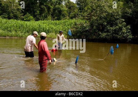 Collection of arowana tropical fish for trade, Amazon Rainforest, Peru - Stock Photo