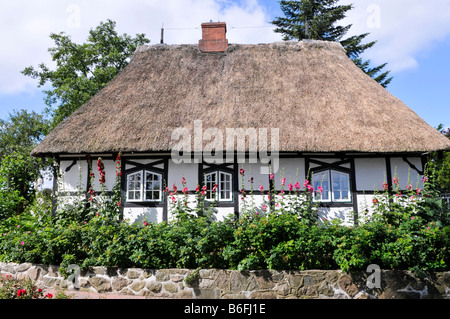 Thatched roof house in Sieseby, Schlei, Schleswig-Holstein, Germany, Europe - Stock Photo