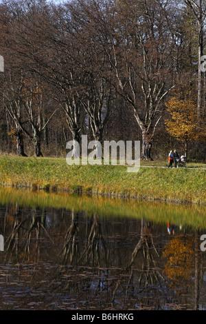 Hornbeam Trees Reflecting in Water Carpinus betulus Herren Island Chiemgau Bavaria Germany - Stock Photo