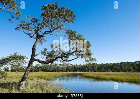 Creek at Clam Creek Picnic Area, Jekyll Island, Georgia, USA - Stock Photo