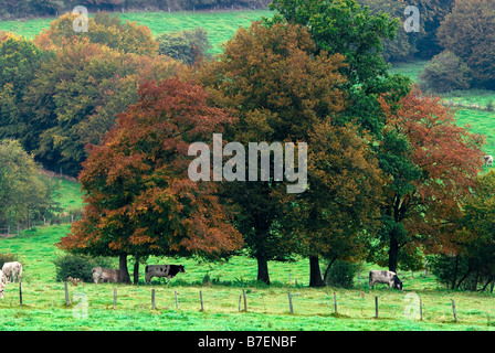 beautiful landscape of autumn trees in the country - Stock Photo