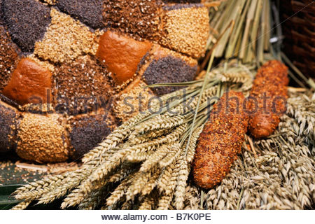 bread rolls with sesame, poppy seed and caraway beneath wheat and oat ears - Stock Photo