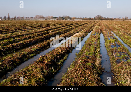 Waterlogged furrows in a field - Stock Photo