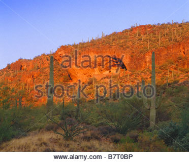 Cliff dwelling at the Lower Ruin built and occupied by Salado culture people in the 14th century Tonto National - Stock Photo