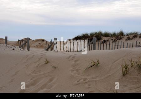 Sand dunes, Cape Cod - Stock Photo