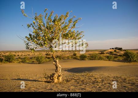 Khuri desert Rajasthan India - Stock Photo