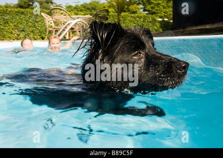 dog swimming in pool - Stock Photo