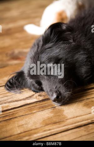 dogs lying on matt outdoors - Stock Photo
