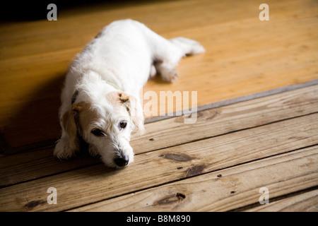 dog lying on matt outdoors - Stock Photo