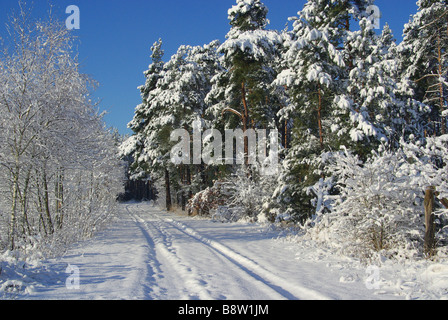 Wald im Winter forest in winter 15 - Stock Photo