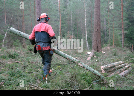 A woodman working in the forest Sweden - Stock Photo