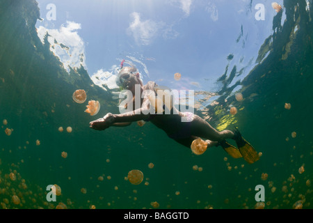 Skin Diving with harmless Jellyfish Mastigias papua etpisonii Jellyfish Lake Micronesia Palau - Stock Photo