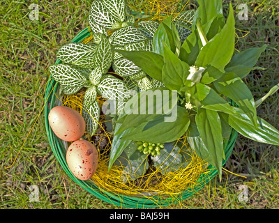 Easter decoration basket with green plants and eggs - Stock Photo