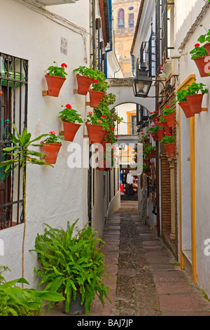 Calleja de las Flores and the bell tower of the Mezquita (Cathedral Mosque) in the City of Cordoba,UNESCO World - Stock Photo