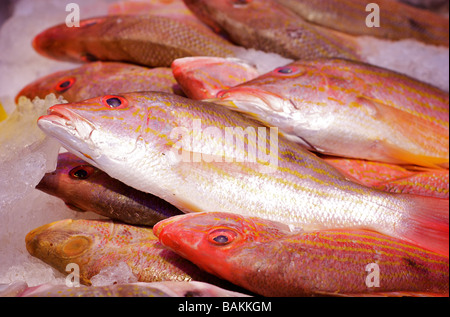 Closeup of Fresh, Iced Fish on Display at a Seafood Market - Stock Photo