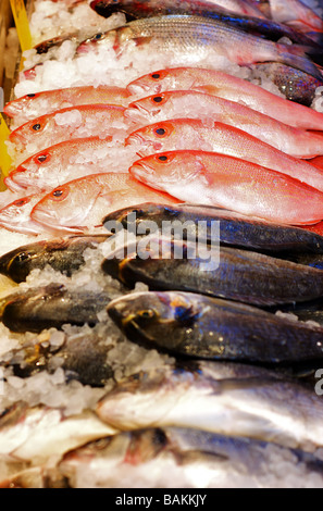 Rows of Fresh, Iced Fish on Display at a Seafood Market - Stock Photo