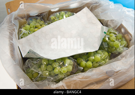 quality seedless table grape packed pack guard paper sheet active ingredient sodium meta bisulfite against funghi - Stock Photo