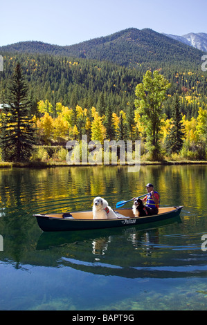 60 ish man paddling a canoe with his emotional support dogs including a Bernese Mountain Dog and a Great Pyrenees - Stock Photo