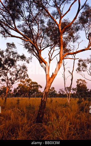 Savannah woodland, Kimberley, Western Australia - Stock Photo