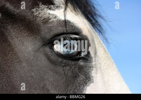 Eye of a mare - Stock Photo
