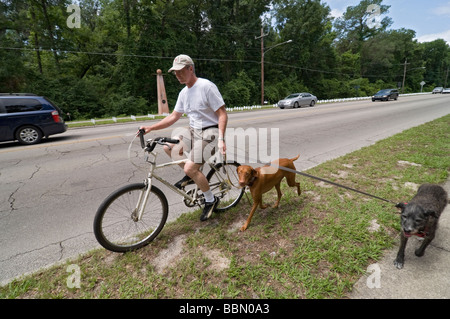 man riding his bicycle and walking/running his two dogs on leashes, Gainesville, Florida - Stock Photo