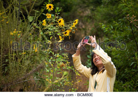 Asian Female Taking Cell Phone Pictures of Sunflowers at Big Dalton Canyon Wilderness Park Glendora California - Stock Photo