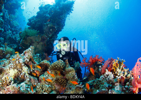 Young teenage woman diver exploring the coral reef surface covered with brightly colored soft and hard corals and - Stock Photo