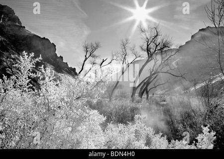 Hoar frost on plants with cottonwood trees with sun. at Snively Hot Spring. Owyhee River. Oregon - Stock Photo