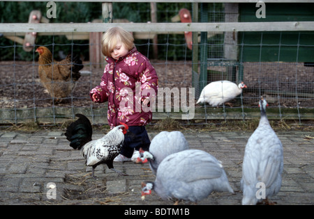 Little child strolling between chickens in petting zoo - Stock Photo