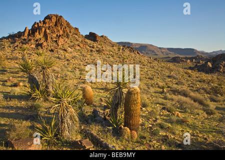 Mojave Desert vegetation, barrel cactus and yucca in Colton Hills area of Mojave National Preserve, California - Stock Photo