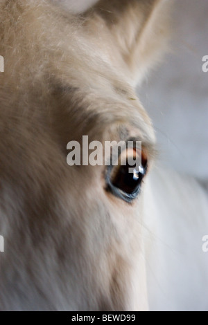 eye of a horse, close-up - Stock Photo