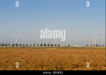 Wind turbines behind a tree-lined avenue, Zeeland, Holland, Netherlands, Europe - Stock Photo