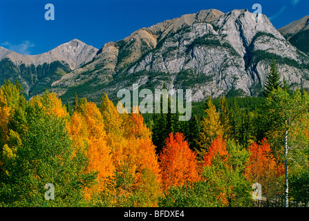 Autumn colors in the Canadian Rocky Mountains along the David Thompson Highway, Alberta, Canada - Stock Photo