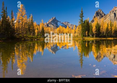 Small Lake in the Opabin Plateau, Lake O'Hara, Yoho National Park, British Columbia, Canada - Stock Photo