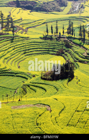 China, Yunnan province, Luoping, rapeseed flowers in bloom - Stock Photo