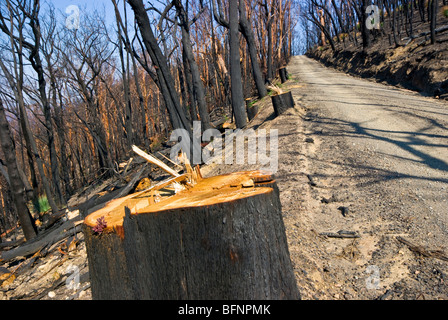 A sawn tree truck after firefighters cleared the way for fire trucks. - Stock Photo
