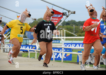 A fun 'human race' on Coral 's dog track in Hove. Fund raising runners wear fancy dress Scoobie Doo character dog - Stock Photo