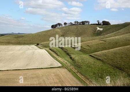 White Horse, Cherhill, Marlborough Downs, Wiltshire - Stock Photo