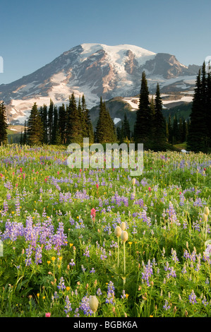Summer Wildflowers, Mt. Rainier National Park, Washington - Stock Photo